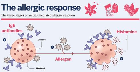 allergy_diagram-2